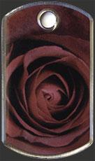 Bild zum Artikel: Rose